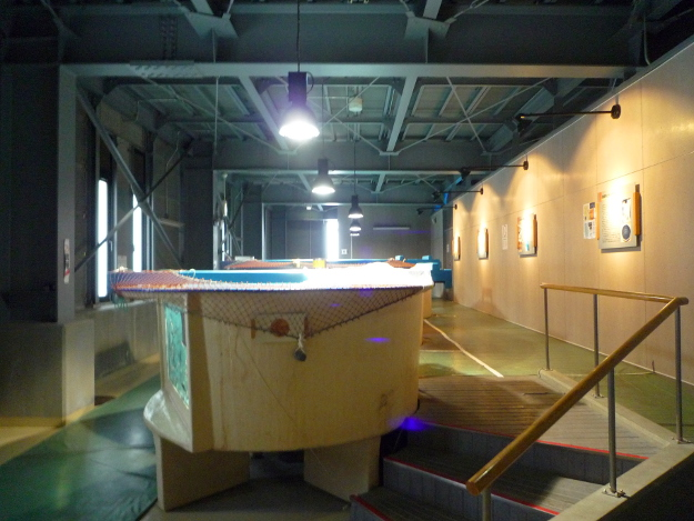とにかくチョウザメ尽くし! 美深町にある無料の水族館「チョウザメ館」