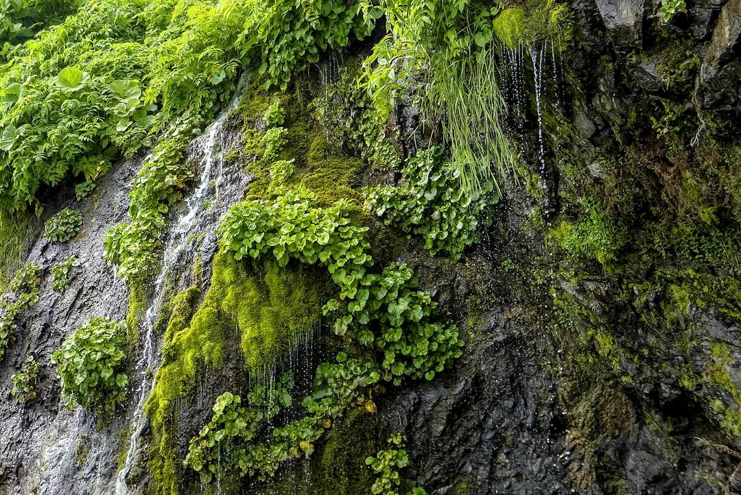 崖から地下水が染み出し何本もの滝に!黄金道路沿いの「フンベの滝」