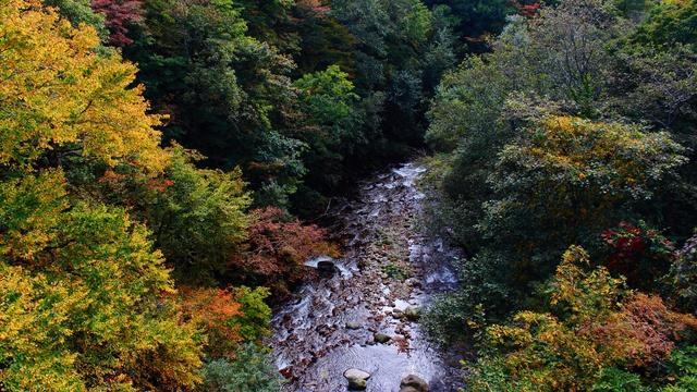 秋色に染まる天馬街道!浦河「五色渓谷」で紅葉が見頃迎える