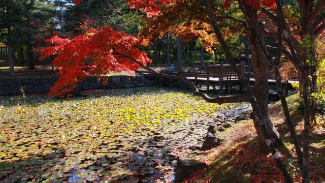 日本庭園を彩る紅葉が見事すぎる!岩見沢の景勝地「玉泉館跡地公園」