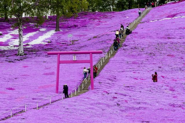 ゴーカートから天空の旅まで楽しみ方いろいろ!ひがしもこと芝桜公園