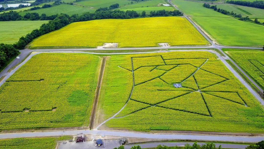 一面黄色の丘で夏を実感!! 国内最大級のヒマワリ畑「ひまわりの里」