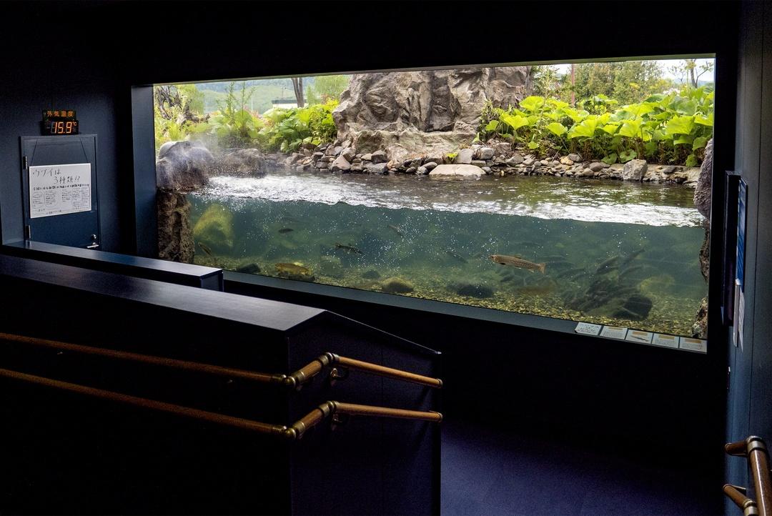 北見「北の大地の水族館」館長に聞く!世界初・日本初の水槽の裏側