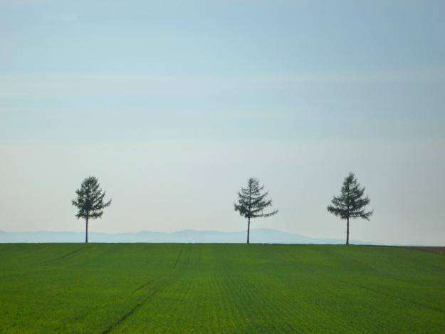 四季折々様々な表情を見せる撮影ポイント「めまんべつメルヘンの丘」