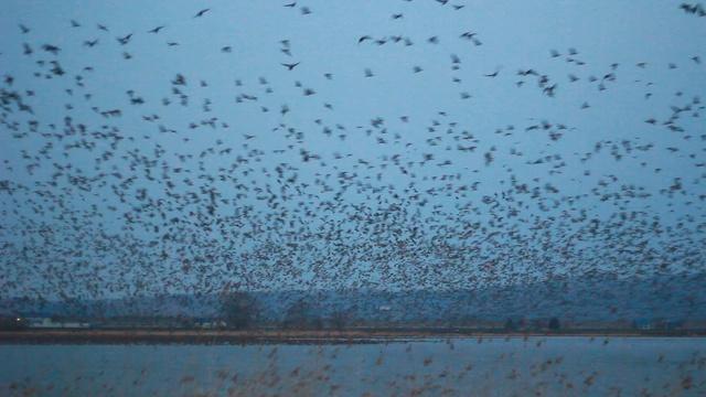 7万羽のマガンが一斉に飛び立つ感動の夜明け―美唄「宮島沼」