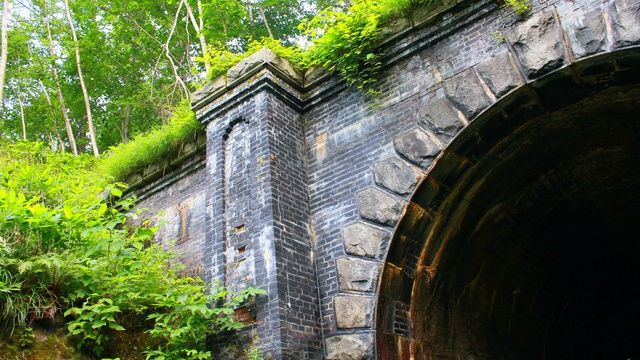 トンネルの中で光るヒカリゴケも見られる!旧狩勝線トンネルめぐり