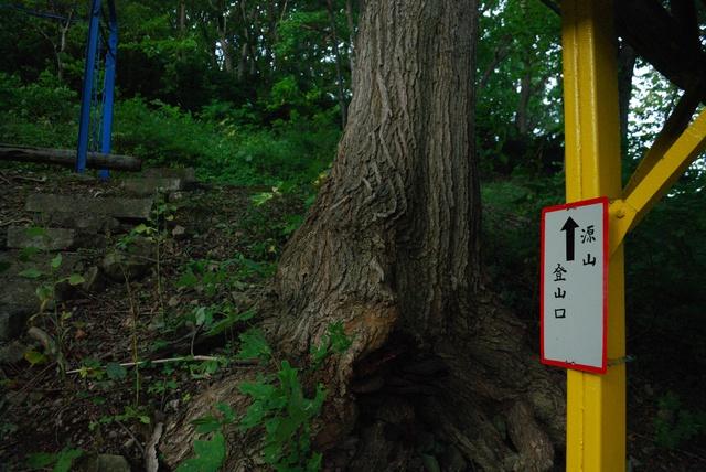 明治41年創立!不思議な世界が広がる小樽の穴場「中野植物園」