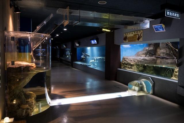 イルカ・アザラシ・トドのショーも人気!「おたる水族館」の楽しみ方