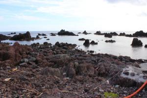 利尻島・仙法志御崎公園にはアザラシに餌やり体験できる場所が存在した!
