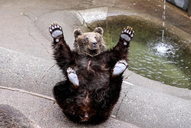 登別だけじゃない!60頭ものヒグマが暮らす「昭和新山熊牧場」