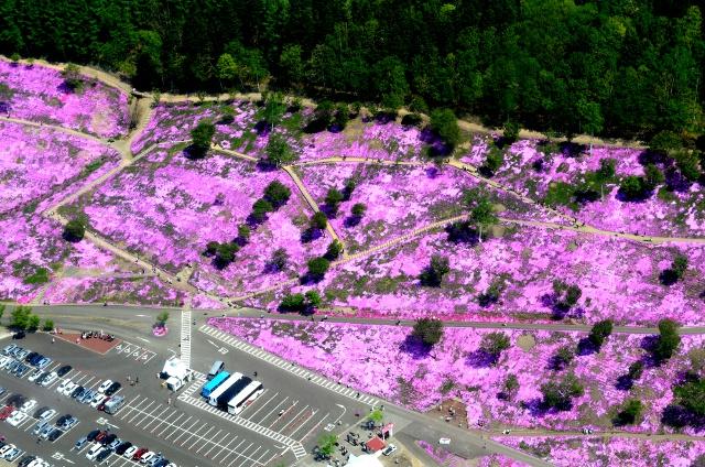 グルメもヘリコプターも!滝上公園の芝桜をもっと楽しむ10のポイント