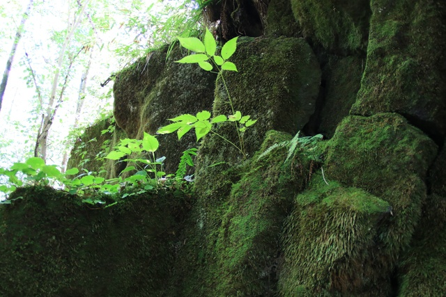 緑の岩肌と木漏れ日の共演―大自然が作り上げた奇観「樽前ガロー」