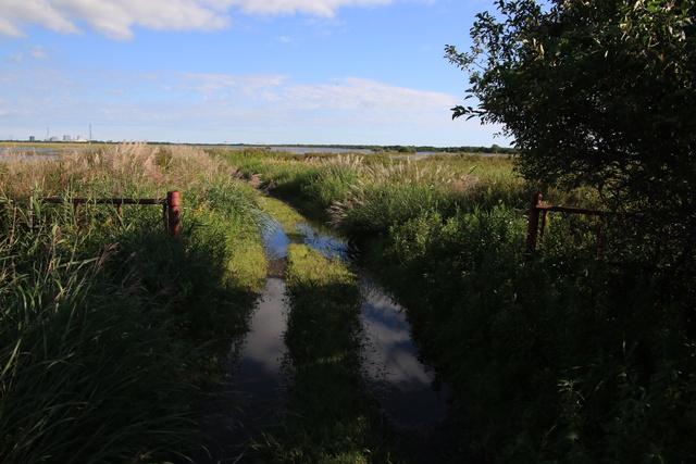 本当に到達困難なのか?苫小牧市勇払湿原にある弁天沼へ行ってみた!