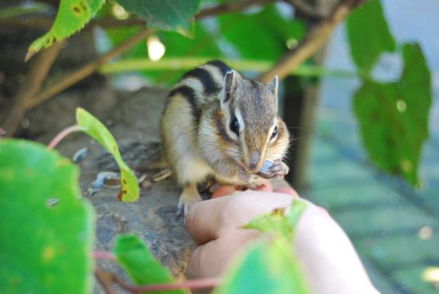 小動物と戯れよう!網走のお楽しみスポット「オホーツクシマリス公園」