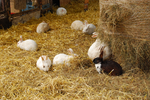 うさぎ小屋では今年も赤ちゃんが誕生!網走原生牧場観光センター