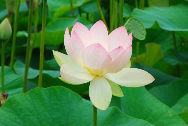 北見には「日本最北の蓮の池」がある!? 新名所「鏡池」に行ってみた