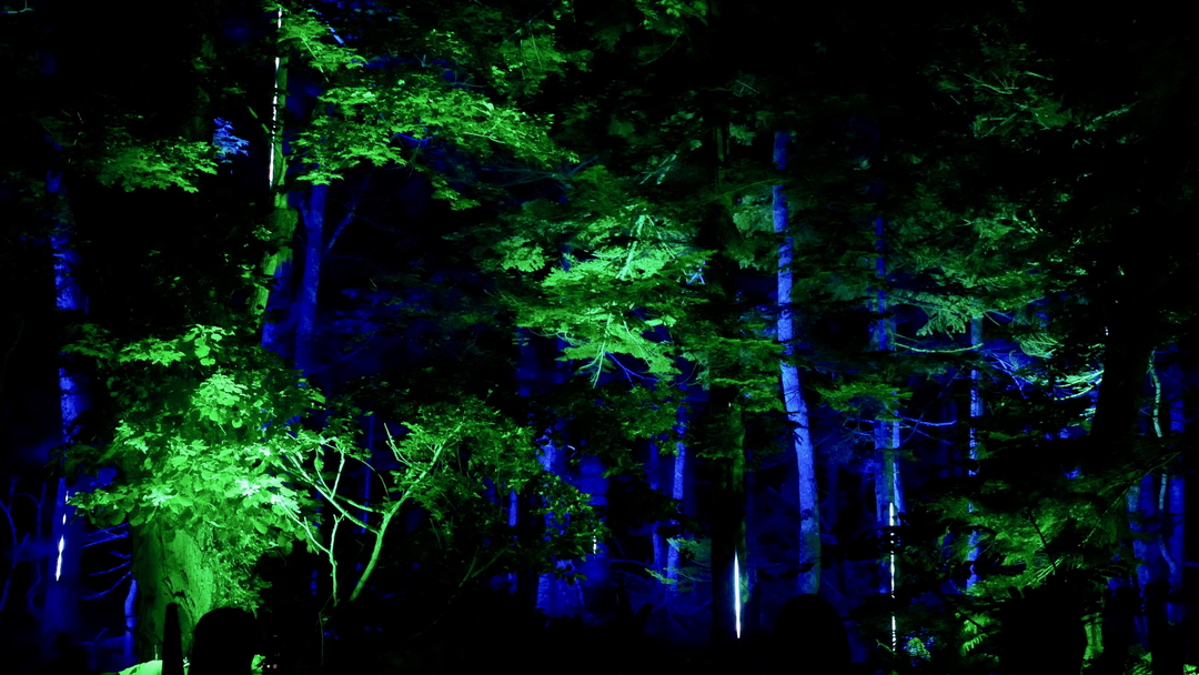 阿寒の森でナイトウォーク!「カムイルミナ」がグランドオープン