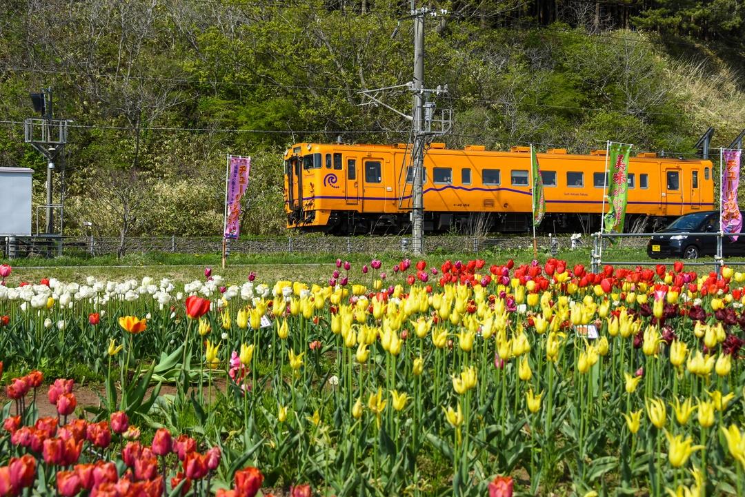 あの豪華列車との競演も! 近年人気急上昇中の木古内町 花スポット3選
