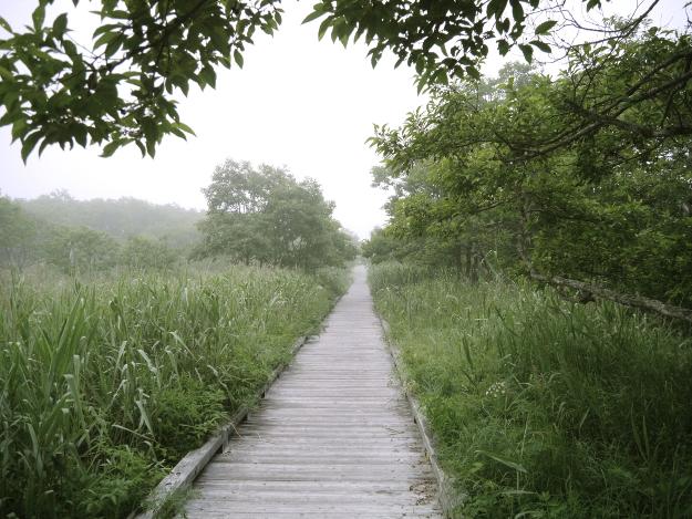 夜明けの釧路湿原で極上のうるおいミストを浴びよう!