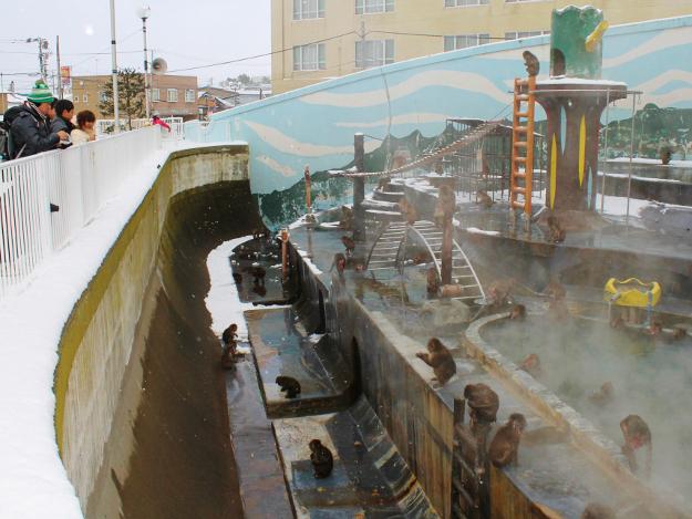温泉につかるサルたちがかわいい!函館 冬の名物「熱帯植物園のサル山」