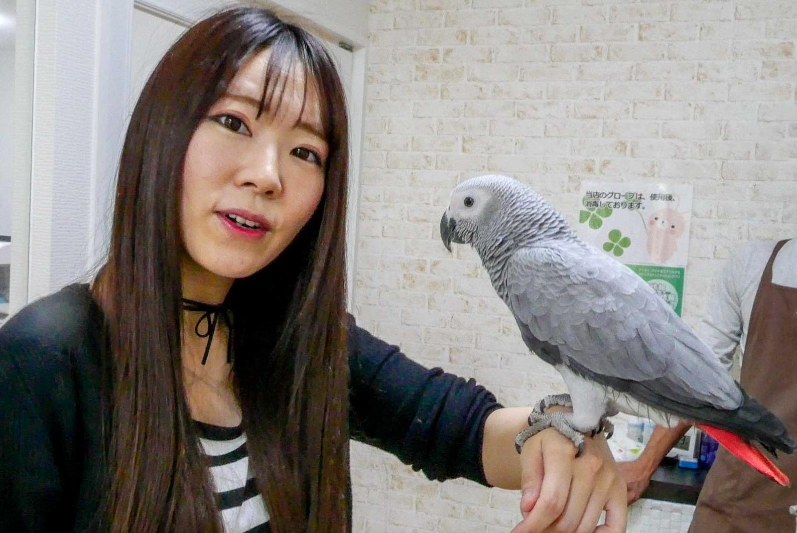 札幌・狸小路でかわいい小動物たちと触れ合う!札幌「あにまるかふぇ」