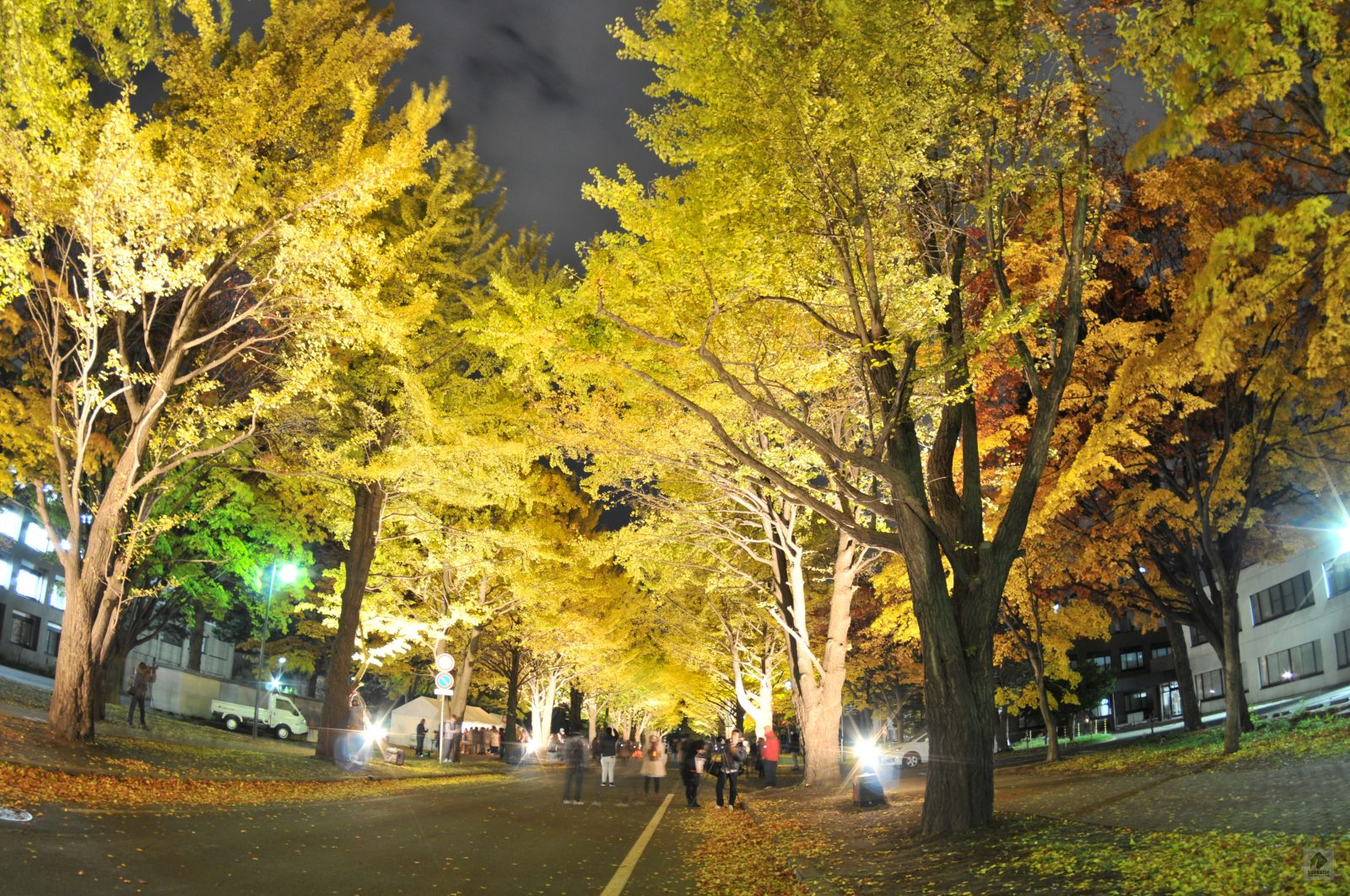 北大イチョウ並木を美しくライトアップ!5年目の開催「北大金葉祭」