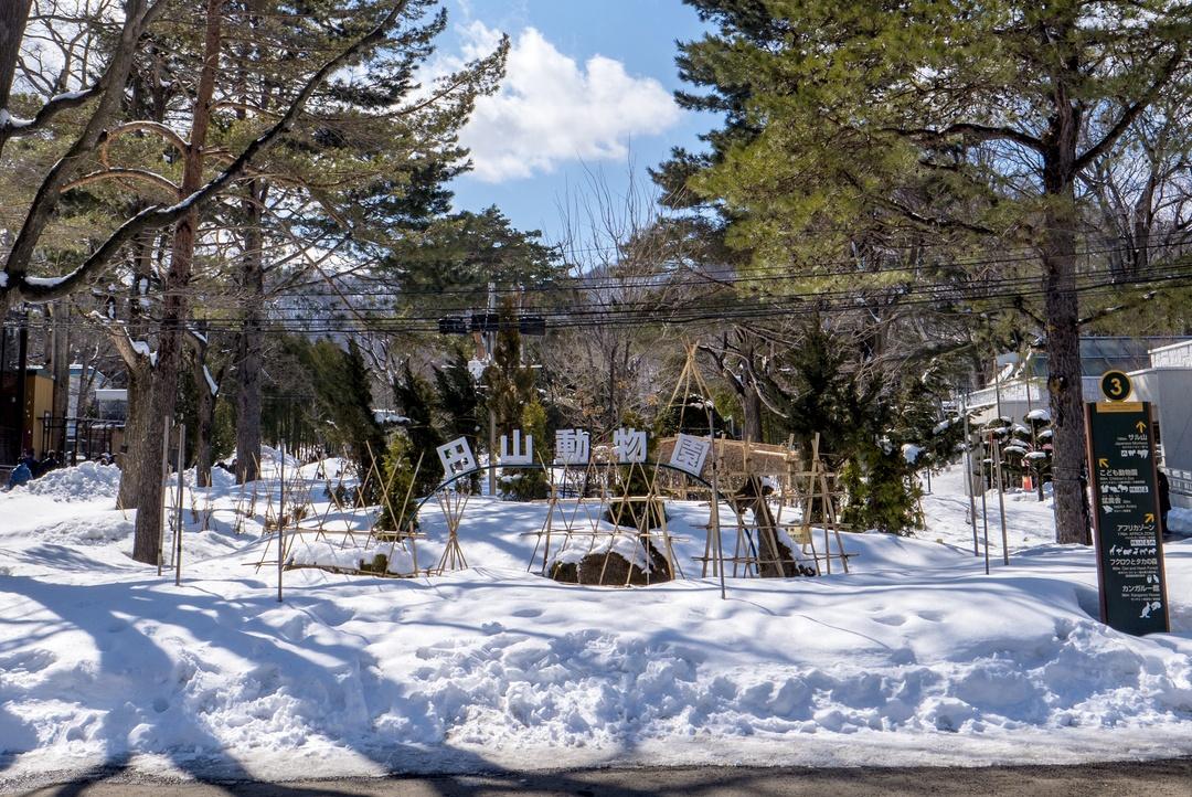 円山動物園にオープンしたホッキョクグマ館の楽しみ方を教えます!!