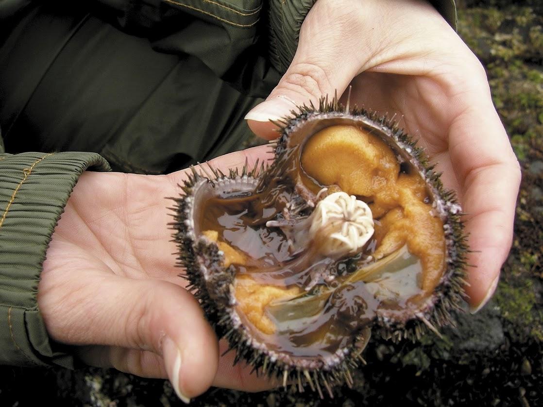 ウニはどうやって捕る?知床ウニ漁師・相原晋一さんが語るウニの魅力