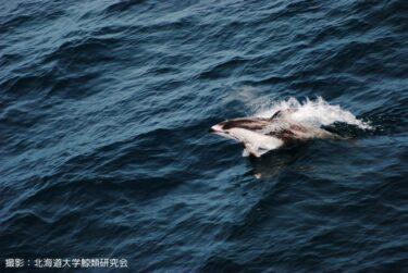 津軽海峡フェリーに乗ればイルカに会えるかも?! 春がおすすめの理由とは