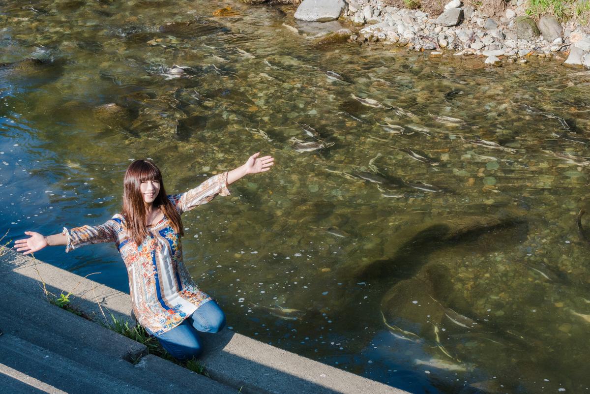カラフトマスやサケの遡上が間近で見られる!知床ウトロのペレケ川