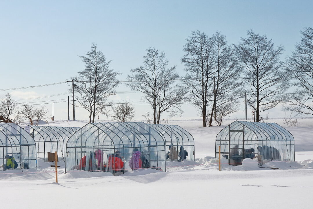 新篠津村しのつ湖で冬の風物詩「氷上ワカサギ釣り」に挑戦しよう!