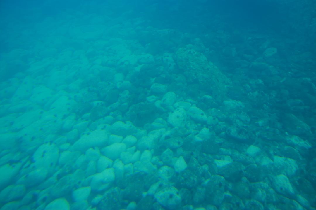 積丹ブルーの海の中を見たければ「水中展望船ニューしゃこたん号」へ