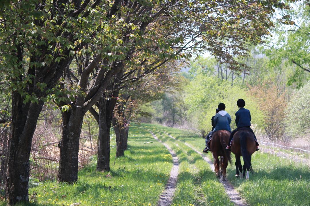 日本最長の「馬の道」がある十勝・鹿追町で乗馬体験してみよう!