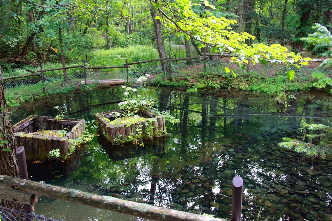 毎分5トンが湧き出る!知床半島の根元 斜里町に湧く名水「来運の湧水」
