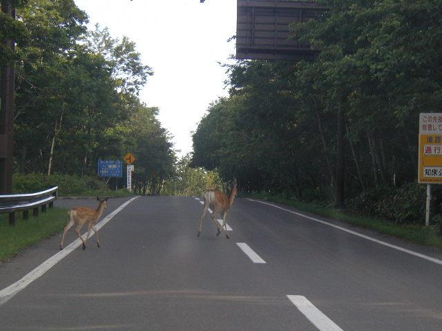 道内で急増するエゾシカ衝突事故に救世主!「新型鹿ソニック」新登場