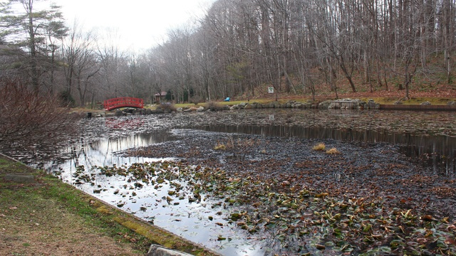 指定は1902年!安平町「鹿公園」が日本最古の保健保安林になったワケ