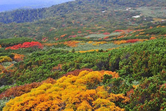 迫力満点の大自然!日本一早い紅葉を見に「大雪山系旭岳」登山に挑戦
