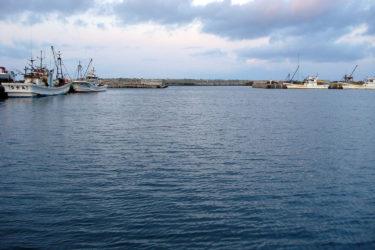 抜海港の冬はゴマフアザラシがたくさんやってくる