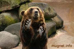 ヒグマ、道内最大の陸上動物