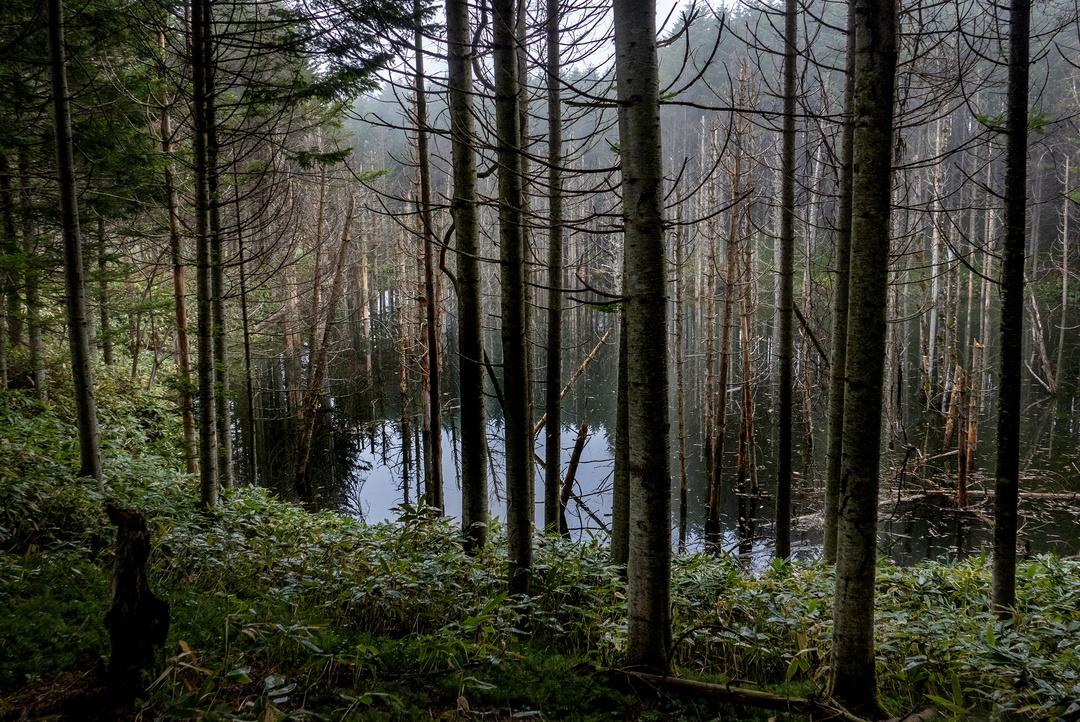 青い池じゃなくて「黒い池」。日高町に知る人ぞ知る漆黒の池があった