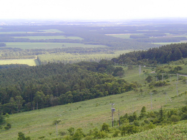 根釧台地には超巨大な防風林がある!格子状防風林の真相