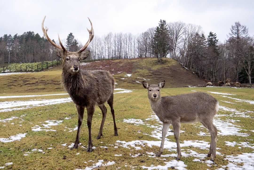 猟見学からジビエディナーまで。冬の西興部村でエゾシカの魅力を学ぼう!