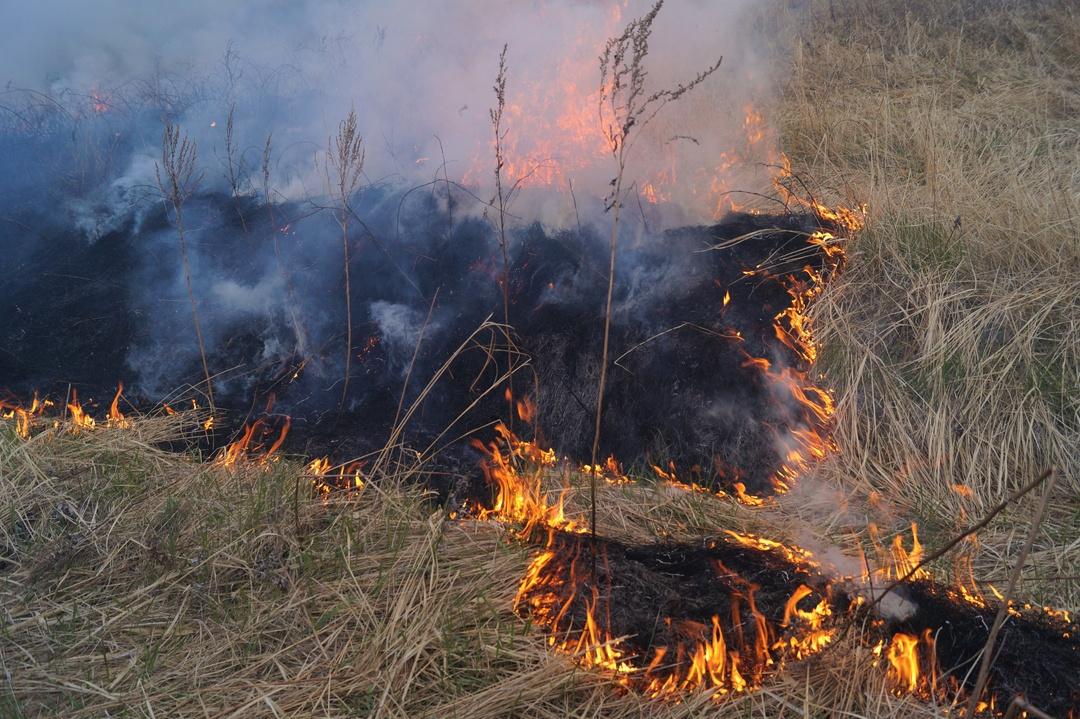 ベールに包まれてきた小清水原生花園の春恒例事業「火入れ」に密着
