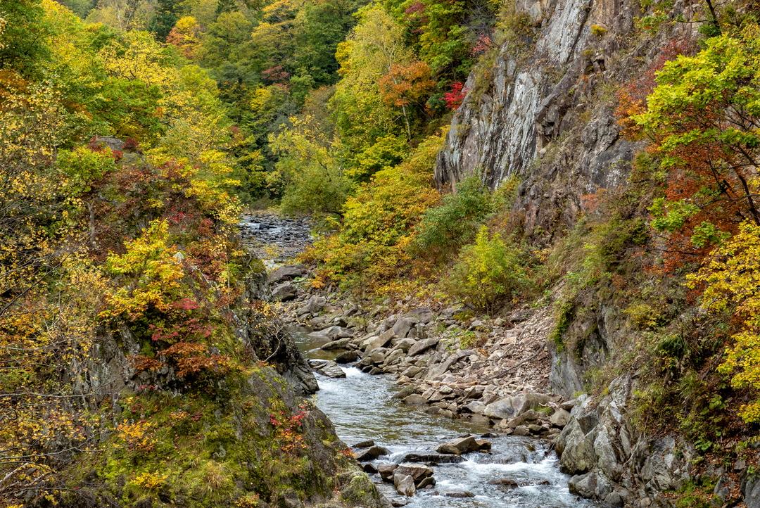 豊平峡ダムから八剣山エリアまで―札幌定山渓五大紅葉を巡ろう!