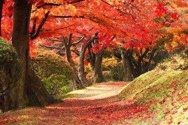 観楓会(かんぷうかい)って何?秋にも花見があるってどういうこと?