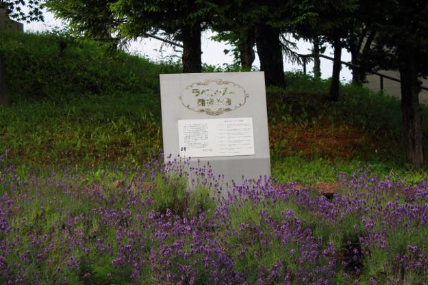 ラベンダー栽培「発祥の地」は富良野ではなく札幌市南区だった
