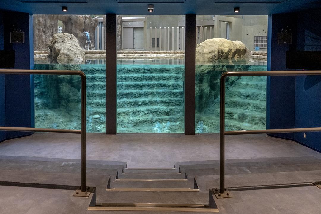 なんと11年ぶり!札幌円山動物園の新ゾウ舎に4頭のゾウが到着!
