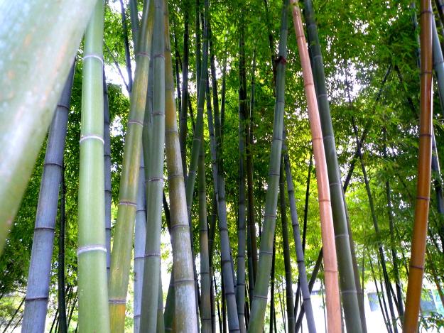 まるで京都にいるかのよう! 松前町にある北限の孟宗竹林