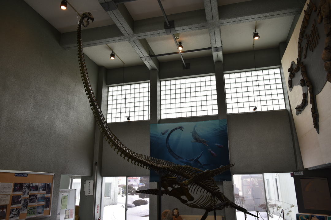 日本最大級の恐竜全身骨格化石が発見!「むかわ竜」の知られざる世界