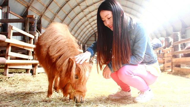 これはカワイイ! 世界最小級の馬20頭に会える十勝清水・ムーミン牧場